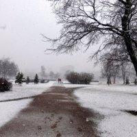 Апрельский снегопад... :: Елена Грошева