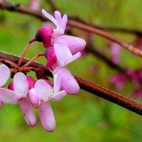 Севастопольская весна :: Елена Даньшина