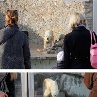 почти белый медведь :: Oksana K