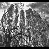 Живое и мёртвое . :: Леонид Кудрейко