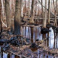Когда деревья умирают стоя... :: Лесо-Вед (Баранов)