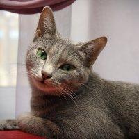Кошка по кличке Норка :: TATYANA PODYMA