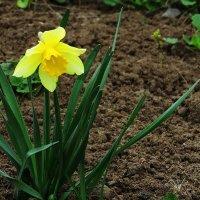 Про цветы весенние 2 :: Natali