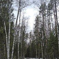 Весенний лес :: Р о м a н