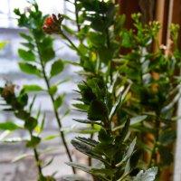 зелень :: Света Кондрашова