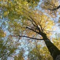 Осенний лес :: Дарья Сапфирова