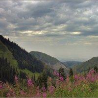 небо,горы,иван-чай :: Сергей Савич.