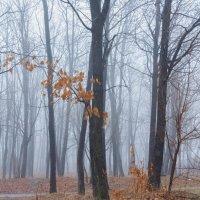 Утренний туман апреля... :: Тамара Морозова