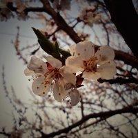 Весна :: Виктория Власова