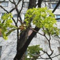 Весна :: Самохвалова Зинаида