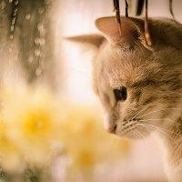 Котейка и дождик.. :: Ксения Бесконечная