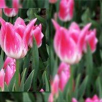 Весна в объективе... :: СветЛана D