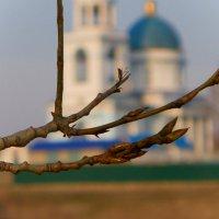 Тополиные почки в апреле.... :: Светлана Игнатьева