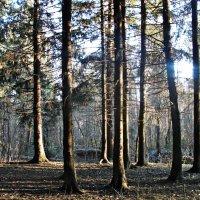 Прогулка по вечернему лесу :: Валерия