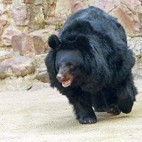 Мужик и охнуть не успел ,как на него медведь насел :: Александр Запылёнов