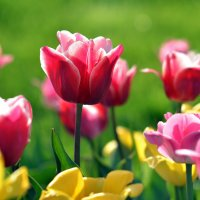 про весну и девушек 1 :: донченко александр