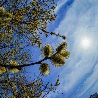 Весна... :: Андрей Воробьев