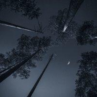 свет луны :: Наталья Ерёменко