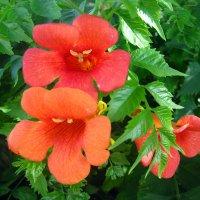 Один из моих любимых цветов :: Lukum
