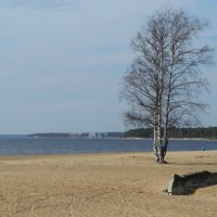 Пляжный весенний пейзажик... :: tipchik