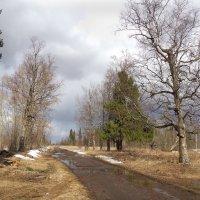 Весенняя дорога :: Валерий Талашов