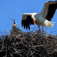 пара готова :: linnud