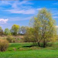 Весна пришла :: Александр Лихачёв