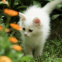 Кошка :: Фазлиддин Инагамов
