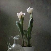 Этюд с белыми тюльпанами :: Карачкова Татьяна