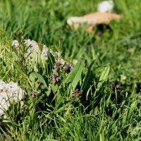 ... из под камней растут цветы. :: Сергей Касимов