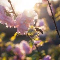весна :: Тамара
