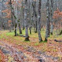 В лесу. :: Береславская Елена