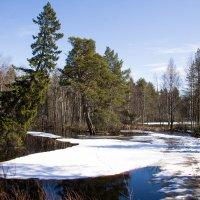 Весна :: Светлана Ку