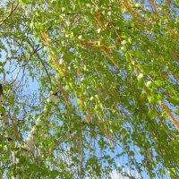 Весна! 19 апреля :: tgtyjdrf