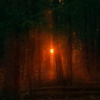 Лучи солнца :: Наталья Золотарева