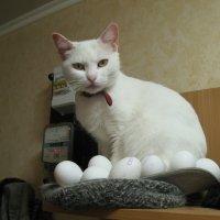 Пасхальные яйца требуют надёжной охраны... :: Алекс Аро Аро