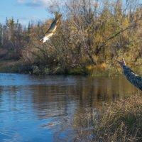 Лети рыбка большая и маленькая :: Андрей Д