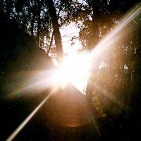 Птица Солнце. :: bemam *