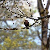 Птаха ... :: Владимир Икомацких