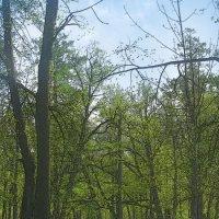 Зеленый шум весны.... :: Tatiana Markova