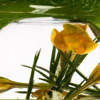 Весенний каламбур... :: Sergey Apinis