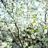 Весна :: Ксения Казимирова