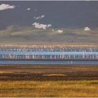 Утро в заповеднике Нгоронгоро...Танзания! :: Александр Вивчарик