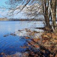 Озёрные проснулись берега.... :: Лесо-Вед (Баранов)