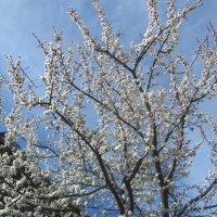весна! :: tgtyjdrf