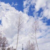 Березки тянутся к небу :: Валерий Талашов