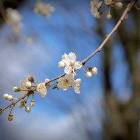 В Стокгольме Весна! :: Swetlana V