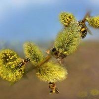 Ода маленькой пчеле :: Удивительное Рядом