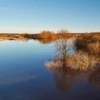 река Быстрица в разливе :: Elena Buldakova