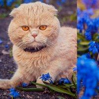 Весна :: Светлана Светленькая